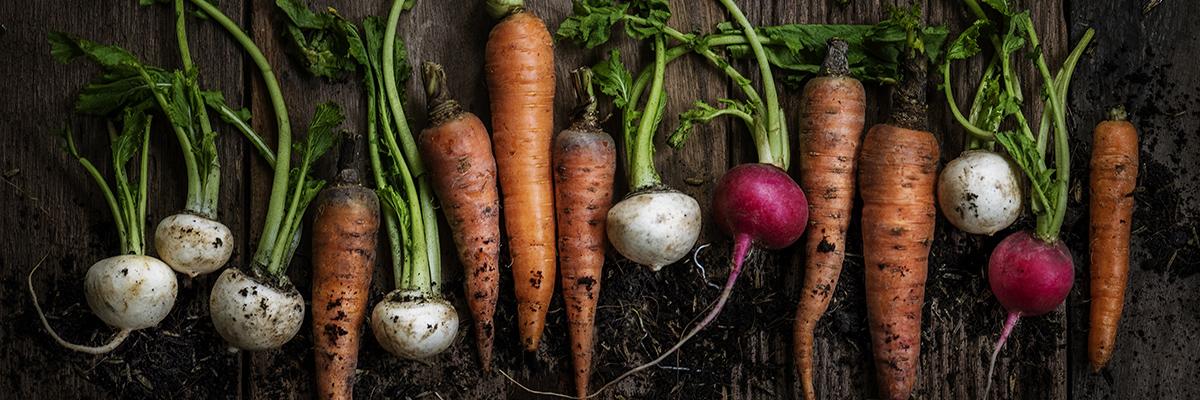 organic vegetables grown in townhome garden