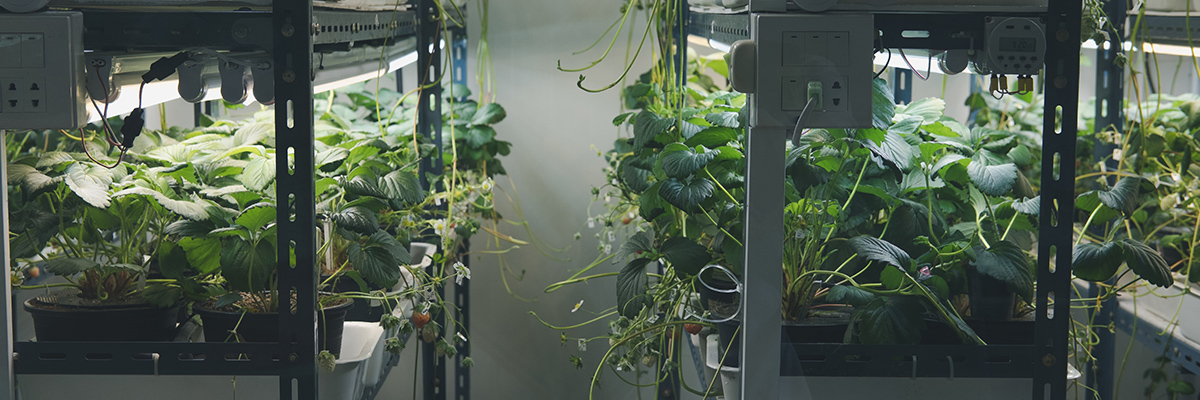 green living plants at home under grow lights