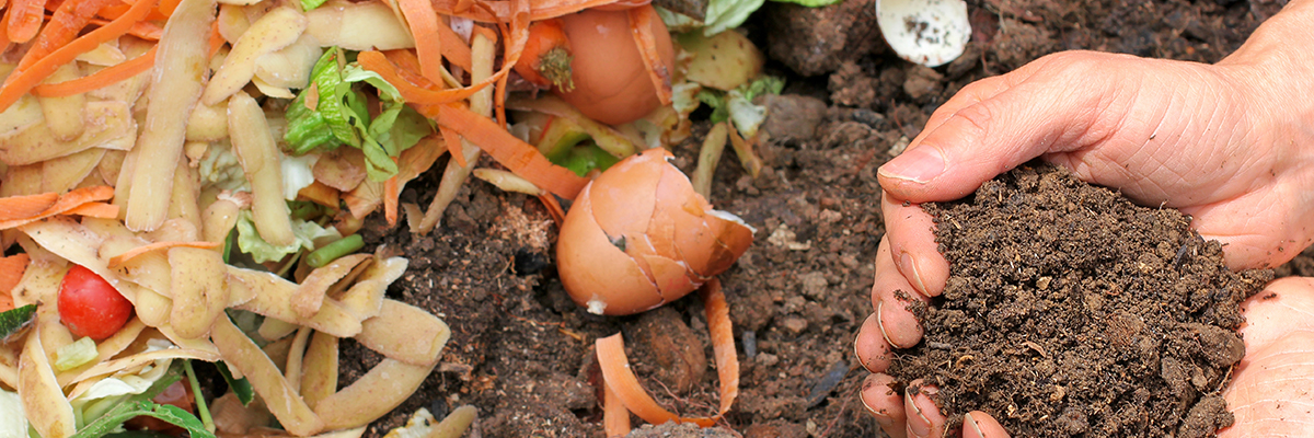 composting locally grown organic vegetables