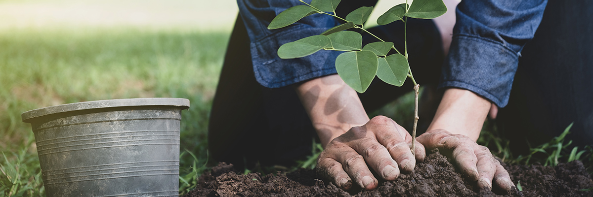 planting trees behind gcd townhomes for sale
